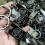 Đặt làm móc khóa kim loại theo yêu cầu tại tphcm giá cực rẻ